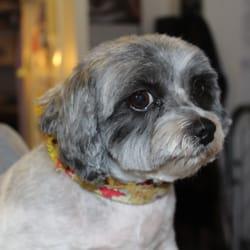 A a pet groomers ink 37 fotos y 32 reseas peluquera canina foto de a a pet groomers ink lodi ca estados unidos solutioingenieria Image collections