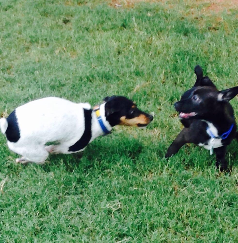 Scottsdale Horizon Dog Park