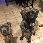 Mastiffs to Mutts - 35 Photos & 12 Reviews - Pet Adoption