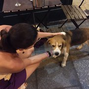 Gallo Romano - Paris, France. Guard dog and concierge after a great meal.