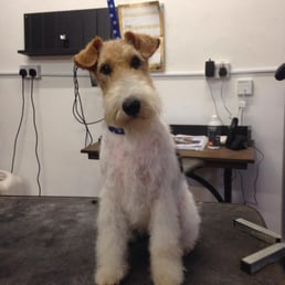 K 9 beauty by teresa pet groomers 19 photos haywards heath photo of k 9 beauty by teresa haywards heath west sussex united solutioingenieria Choice Image