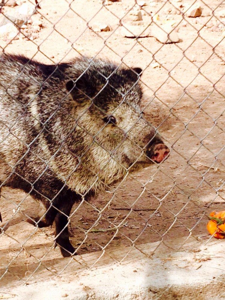 Heritage Park Zoological Sanctuary: 1403 Heritage Park Rd, Prescott, AZ
