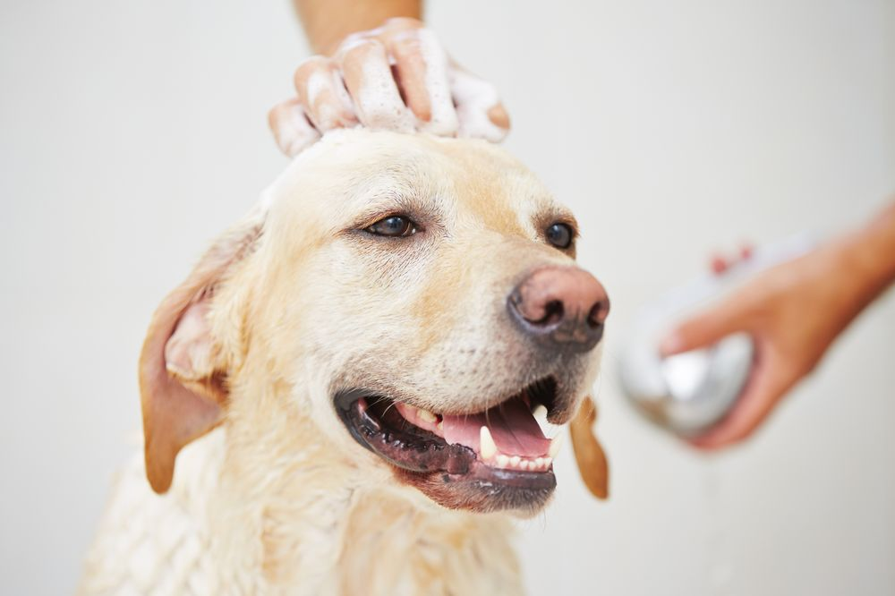 South Bay Dog Grooming