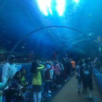 Georgia Aquarium 3697 Photos 1602 Reviews Aquariums