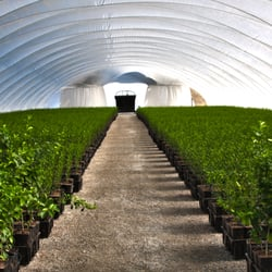 Amazing Photo Of Youngu0027s Nursery   Thermal, CA, United States. A View Inside One
