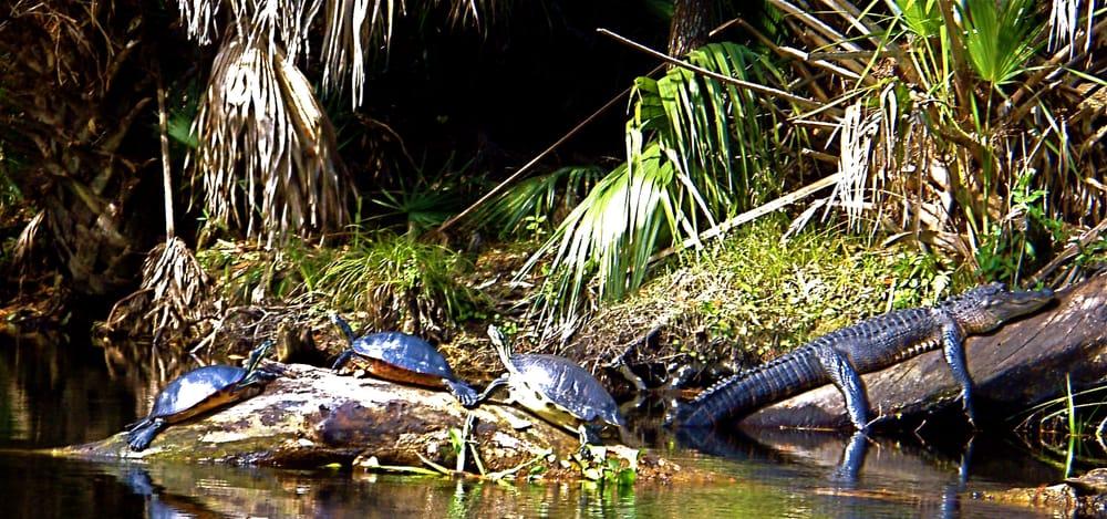 Adventures in Florida: 3208 East Colonial Dr, Orlando, FL