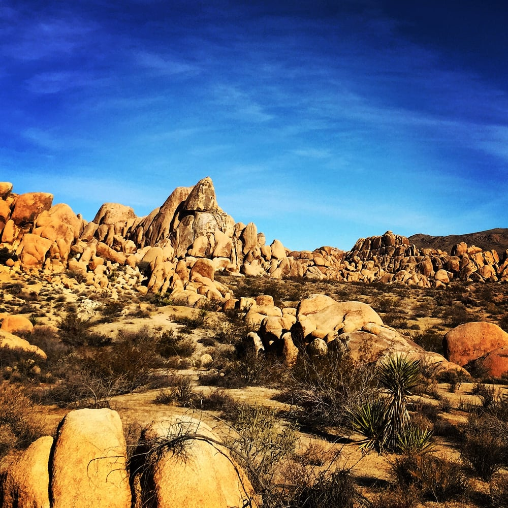 Joshua Tree Excursions