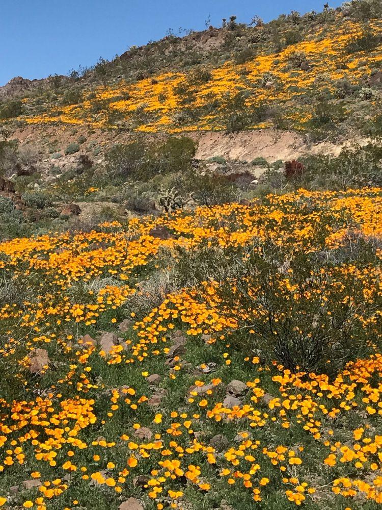 Sitgreaves Pass: Oatman Rd, Kingman, AZ