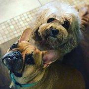 Scottys California Rottweiler Ranch - 134 Photos - Pet