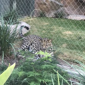 photo of siegfried roys secret garden and dolphin habitat las vegas nv - Siegfried And Roy Secret Garden