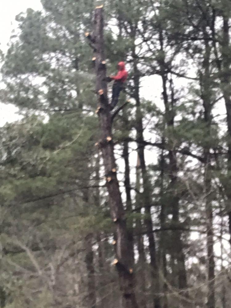 Robert's Tree service: Cottageville, SC