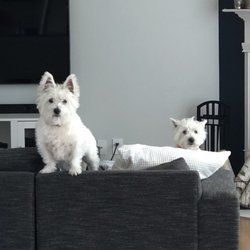 Comfort Zone Animal & House Sitters - 42 Photos - Pet