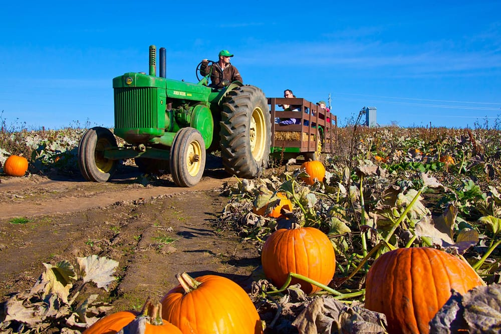 Airlie Hills Harvest Festival & Pumpkin Patch
