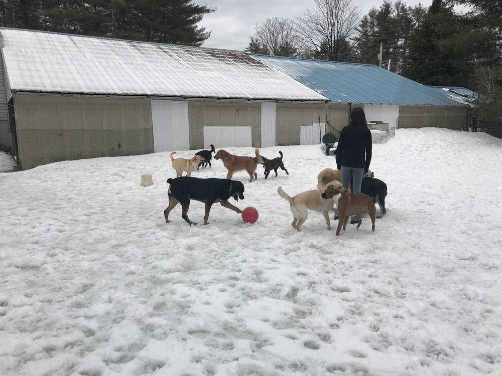 Woodlawn Pet Resort: 406 Poverty Plains Rd, Warner, NH