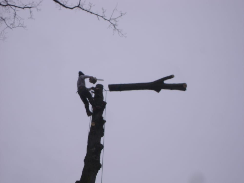 Henderson Bros Tree Service: 1475 Territorial Rd, Benton Harbor, MI