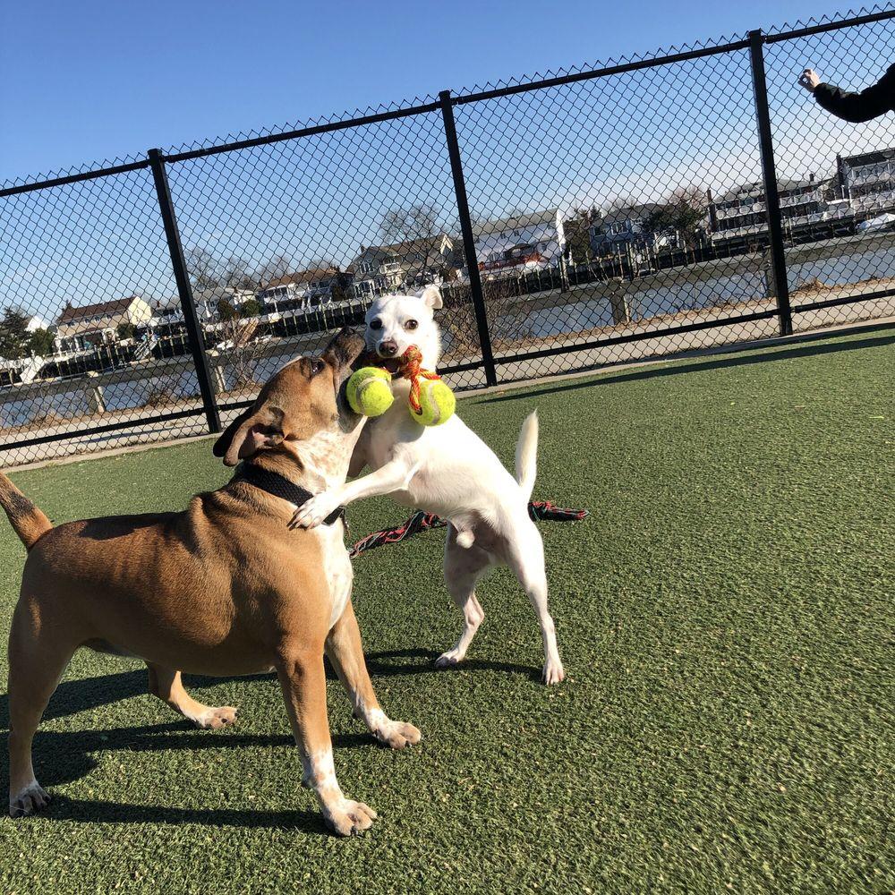 Bay Park Dog Run: 1ST Ave, East Rockaway, NY