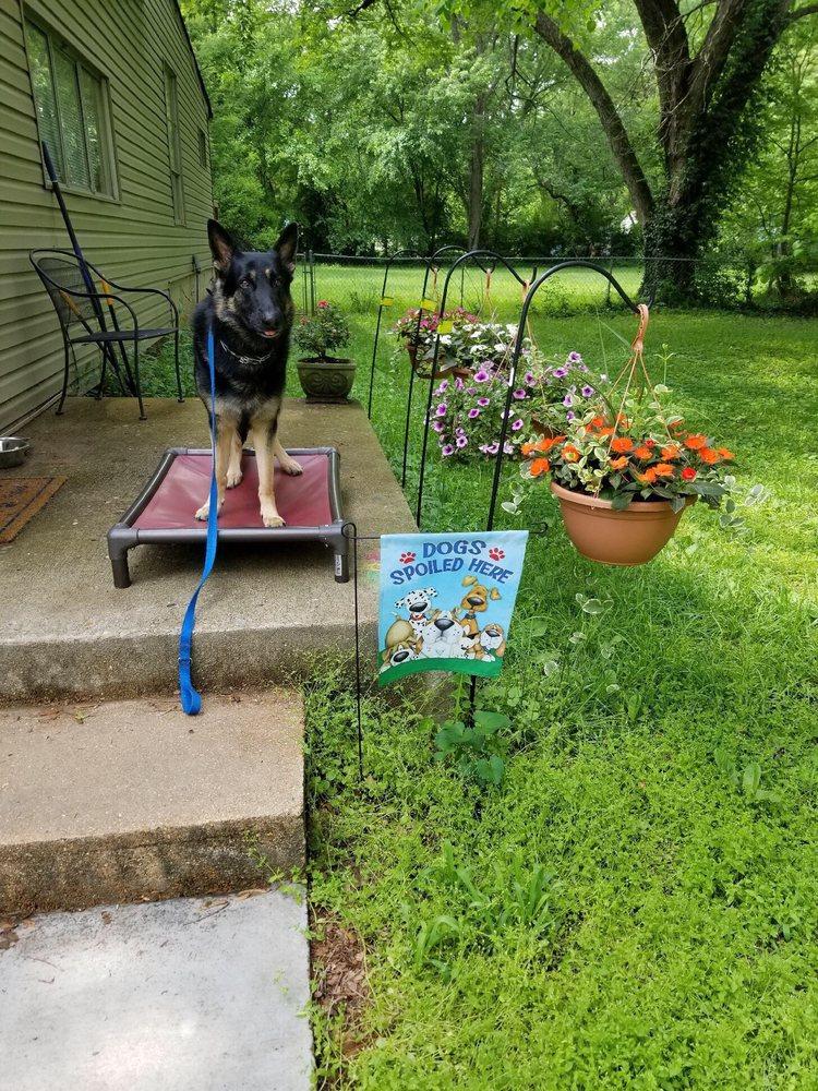 Matty B's Dog Training: Arnold, MO