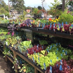 Photo Of Sloat Garden Center Mill Valley Ca United States The Herbs