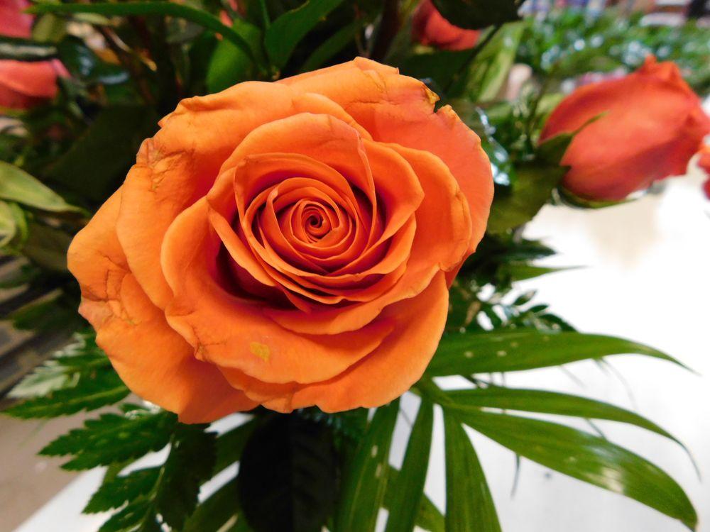 Art's Flower and Gift Shop: 1227 Ohio Ave, Dunbar, WV