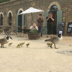 canada goose london yelp