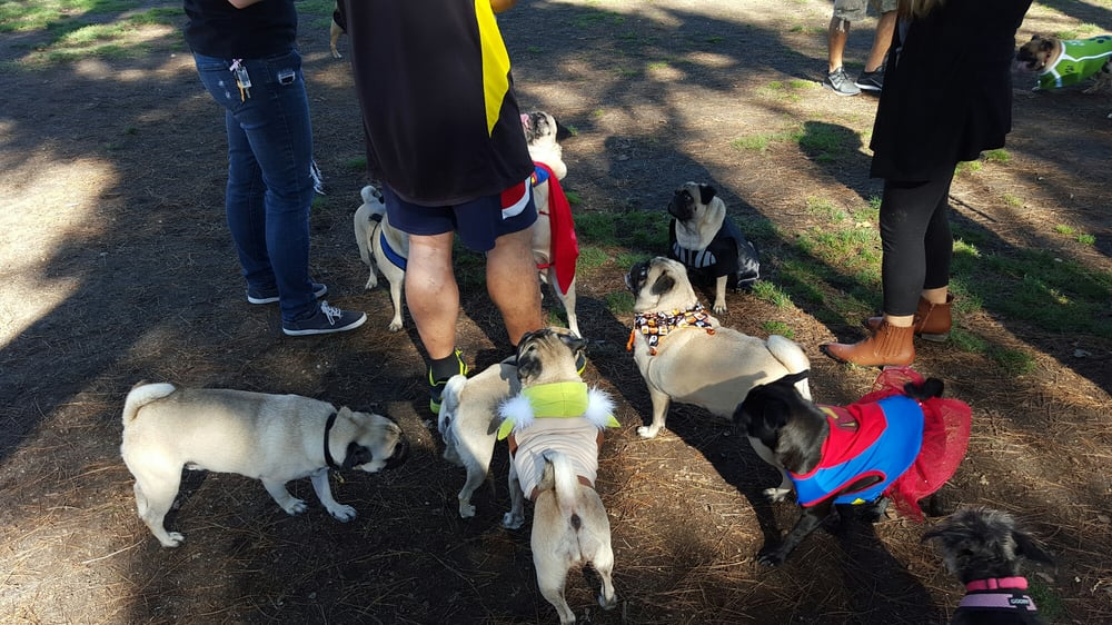 Home Run Dog Park Lakewood Ca