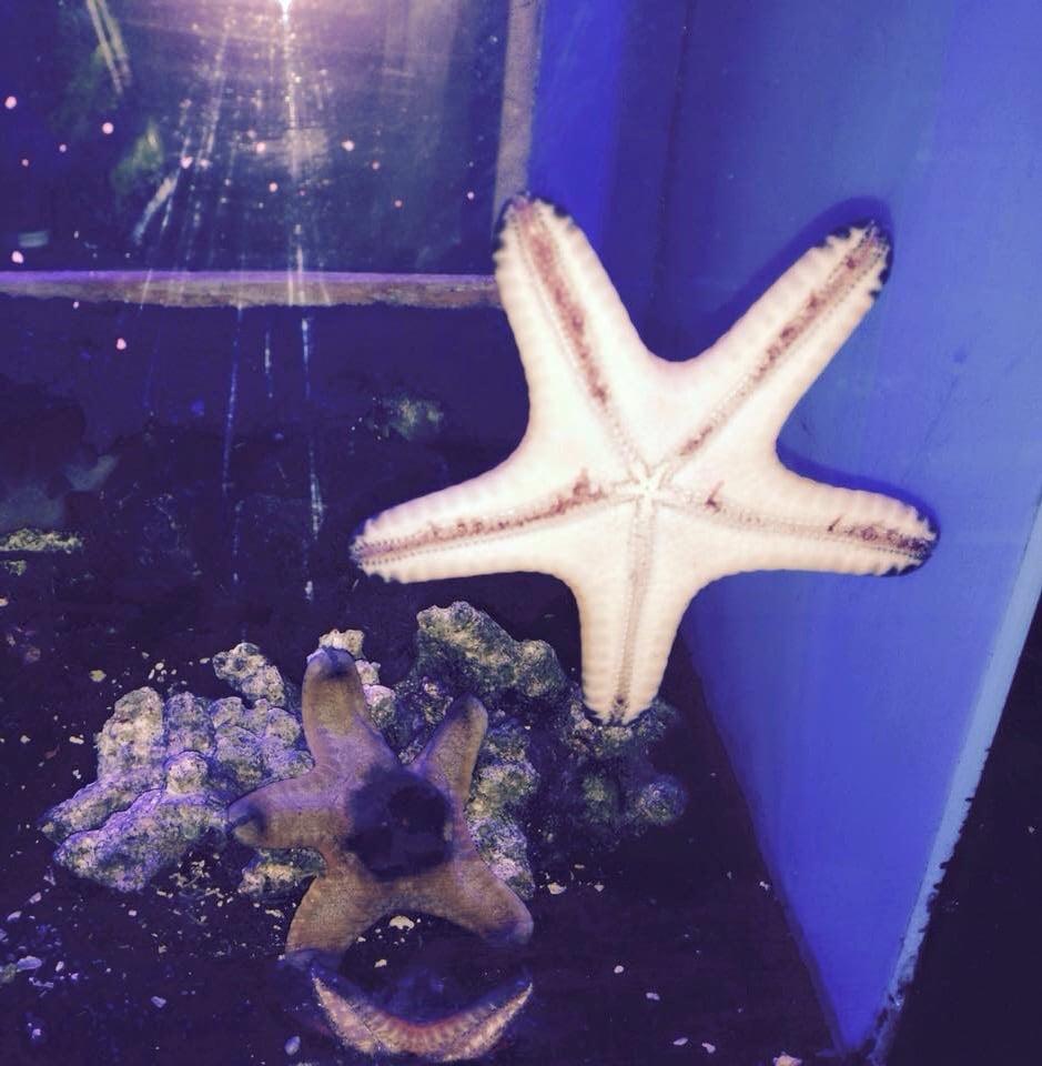 Photos For Aquatek Tropical Fish Yelp