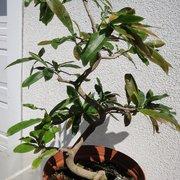 Mai Vang 46 Photos Nurseries Gardening 918 W Winton Ave