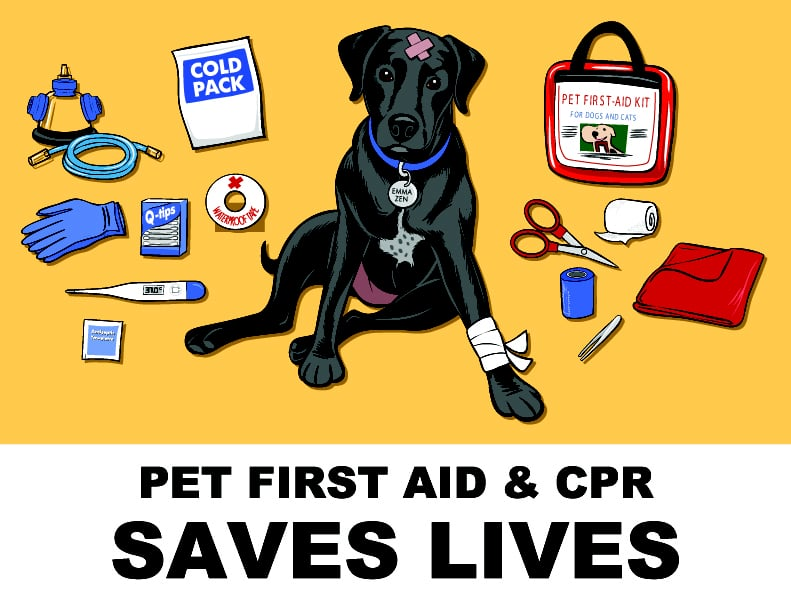Small Companion Animal First Aid Kits Introduced | Newswire |First Aid For Pets Files