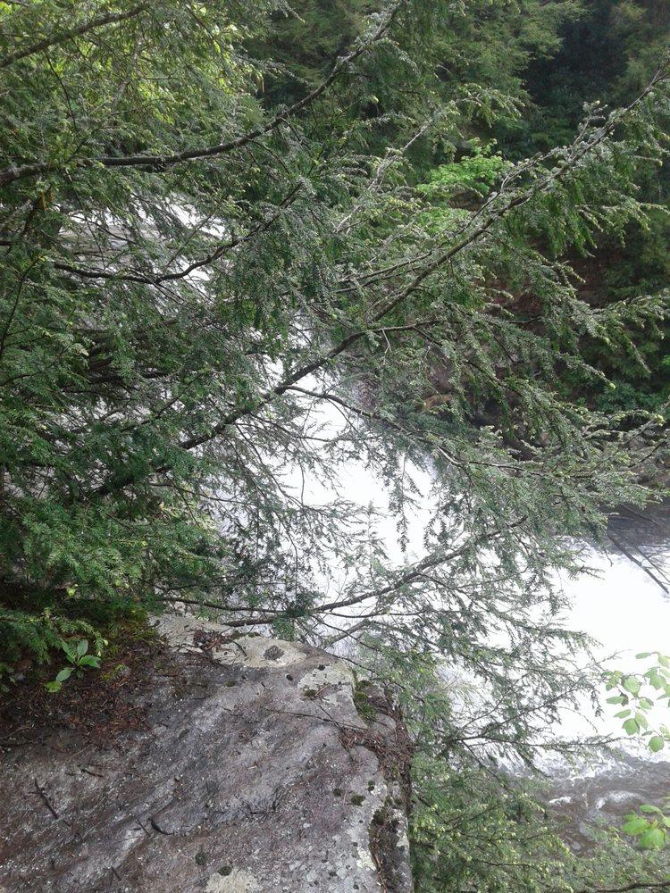 Muddy Creek Waterfall: 2470 Maple Glade Rd, Oakland, MD