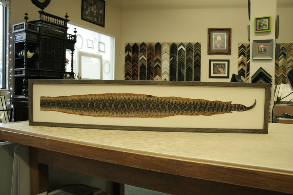 Kelly recently framed a rattlesnake skin for a client. Challenging ...