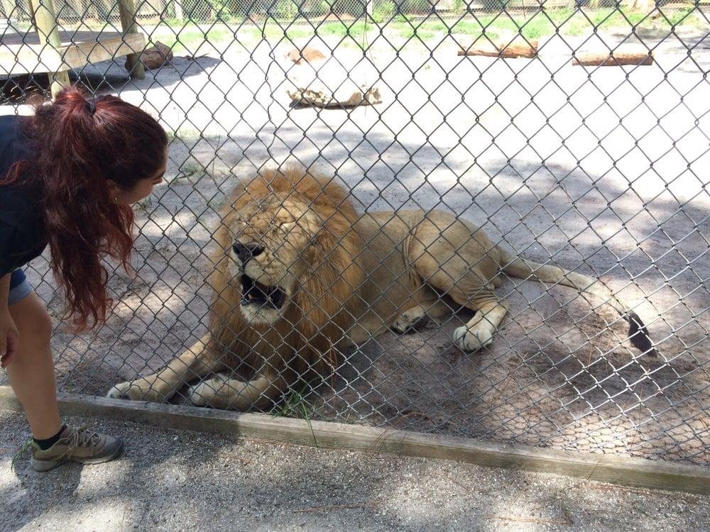 Lion Yelp