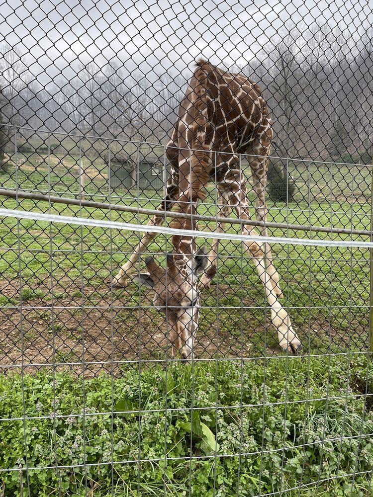 Creation Kingdom Zoo: 1692 Snowflake Rd, Gate City, VA