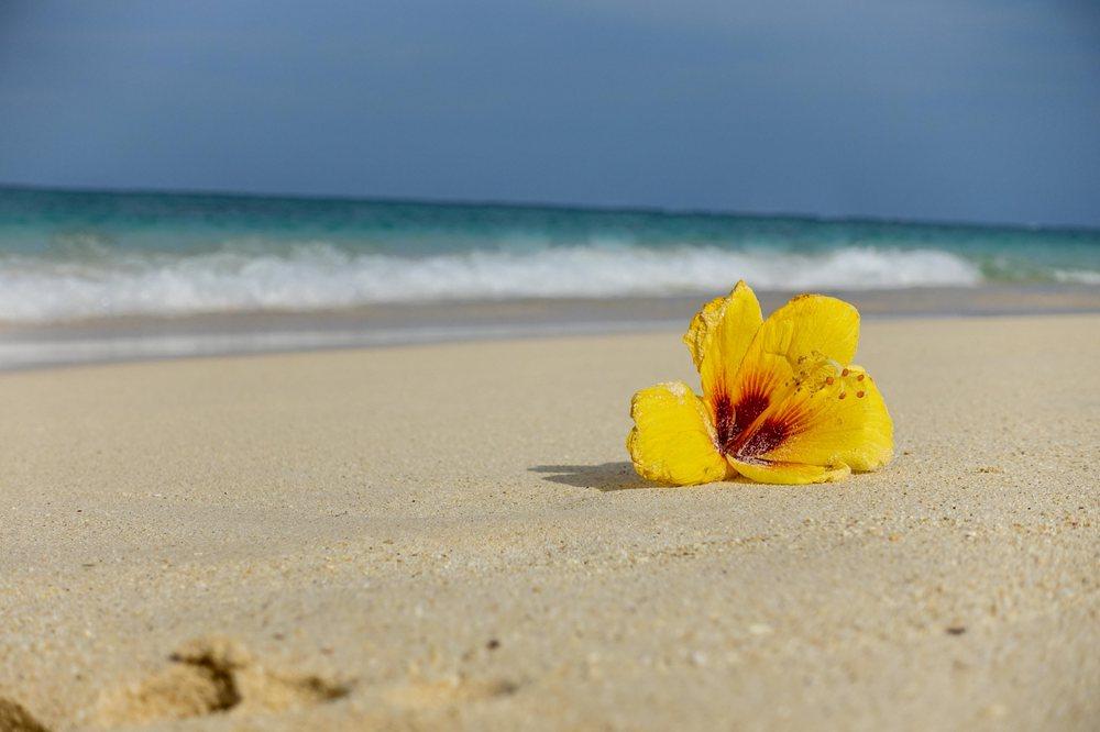 The Real Hawaii