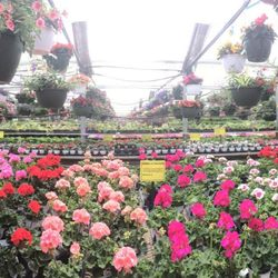 Photo Of Hartman S Towne Country Greenhouse Manitowoc Wi United States Panorama