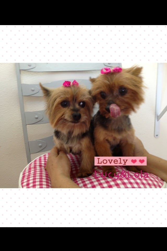 Lovely Dog Beauty Salon