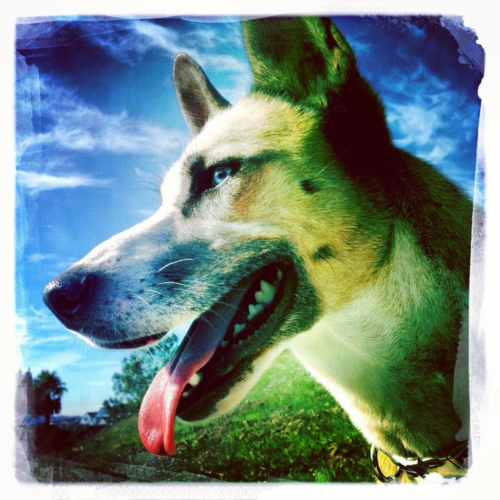 Noe's Ark Dog Walking: Noe Valley, San Francisco, CA