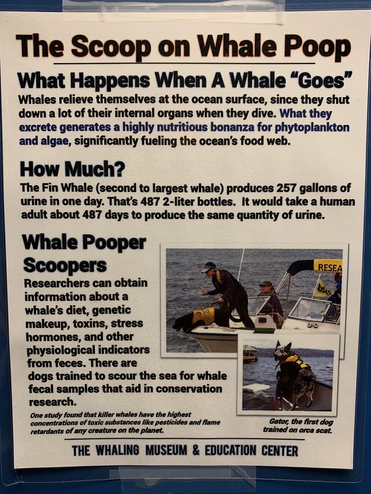 The Whaling Museum & Education Center: 301 Main St, Cold Spring Harbor, NY