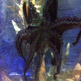 Sea Life Charlotte Concord Aquarium Last Updated June