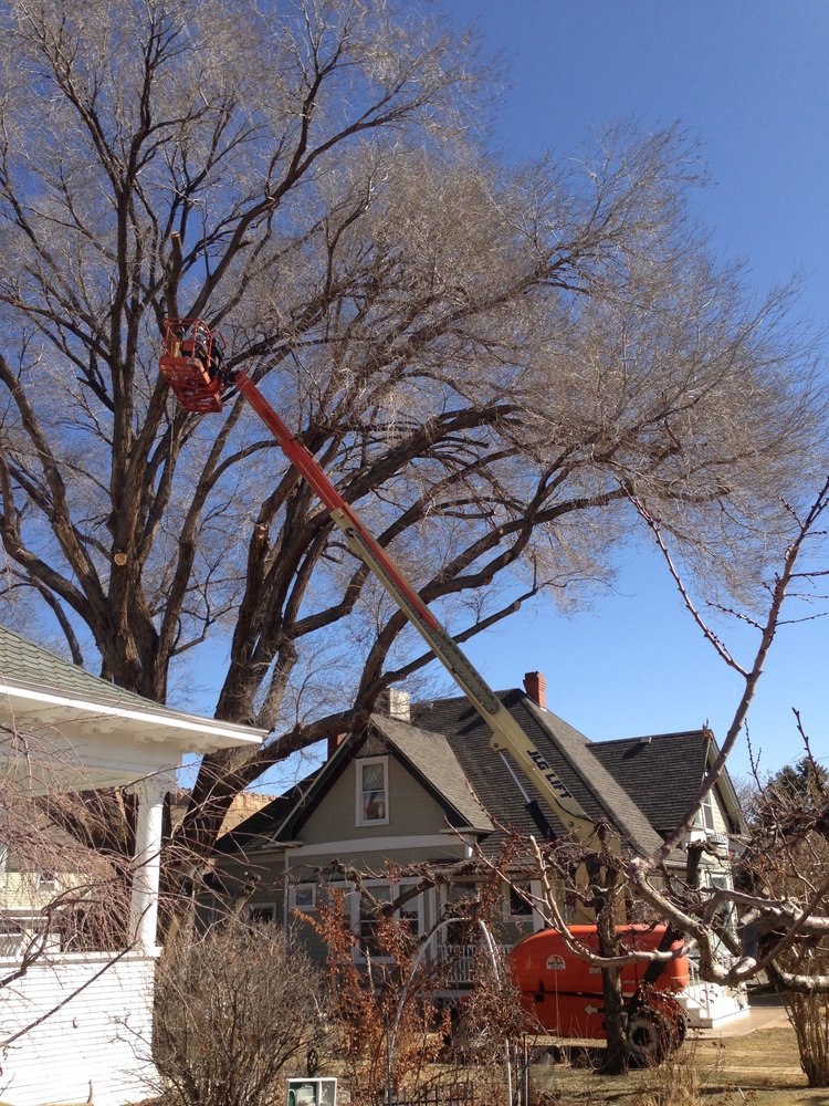 High Country Tree Service LLC: Palisade, CO