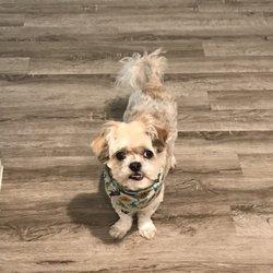 Oak Clips Pet Boutique & Grooming - 33 Photos & 46 Reviews