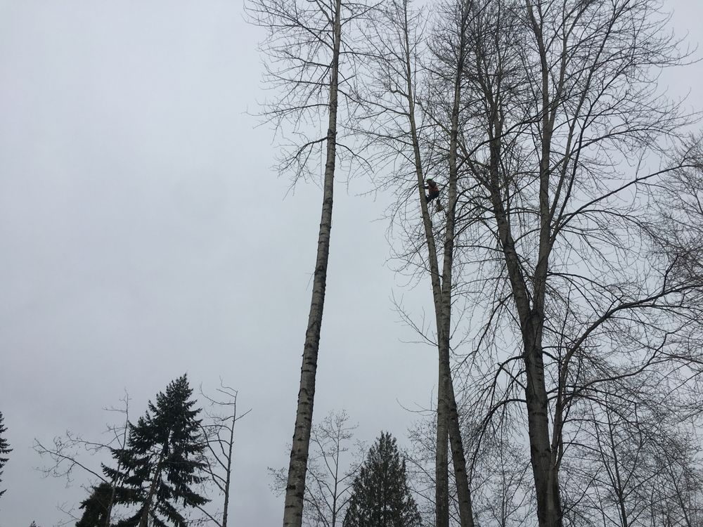 Selective Tree Removal: 16012 Roosevelt Rd, Snohomish, WA