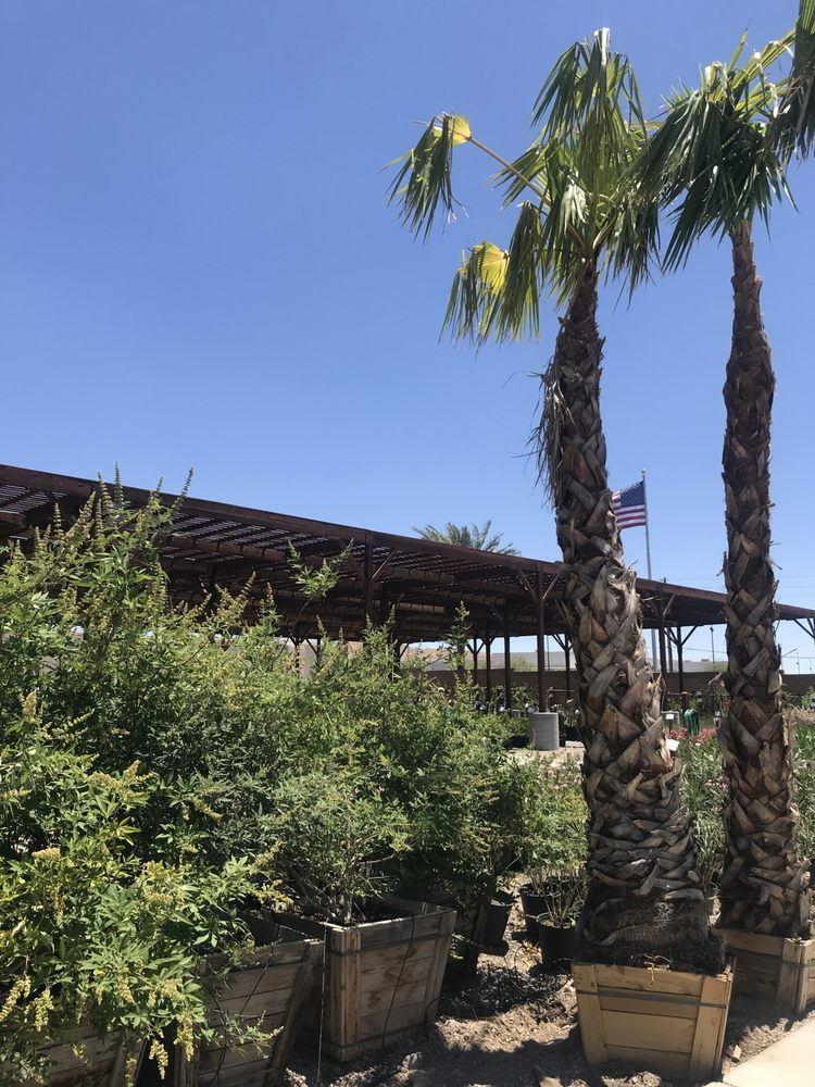 Star Nursery: 1579 Mohave Dr, Bullhead City, AZ