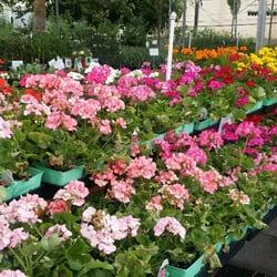 Valley verde community garden center and desert gift shop for Idea verde garden center