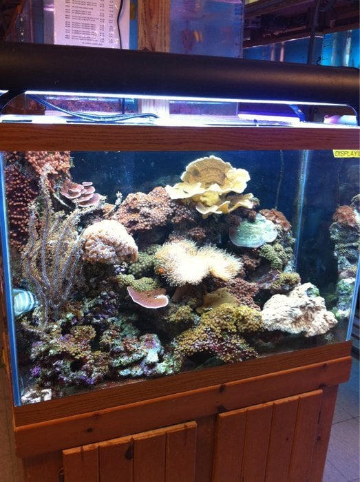 Fish safari pet stores 2029 lynnhaven pkwy virginia for Fish store virginia beach