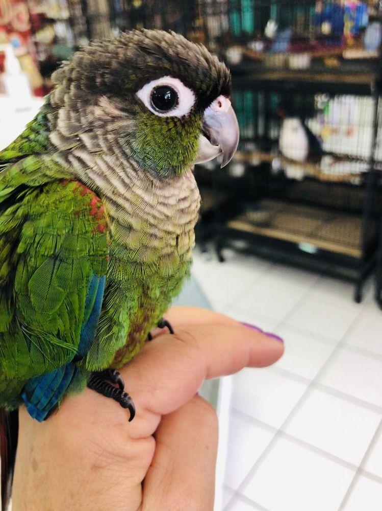 Simbad's Birds & Pets - 12 Photos & 24 Reviews - Pet Sitting