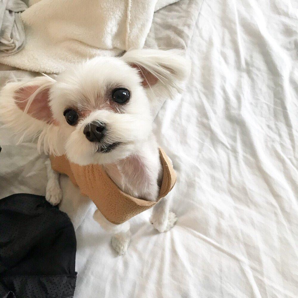 QQ Pets Grooming