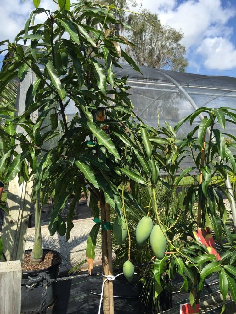 Riverland Nursery: 13005 Palm Beach Blvd, Fort Myers, FL