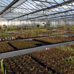 Photo Of Hampshire Carnivorous Plants Upham Southampton United Kingdom Nursery