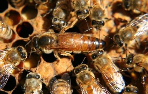 Lappe's Bee Supply and Honey Farm: 117 Florence Ave, East Peru, IA