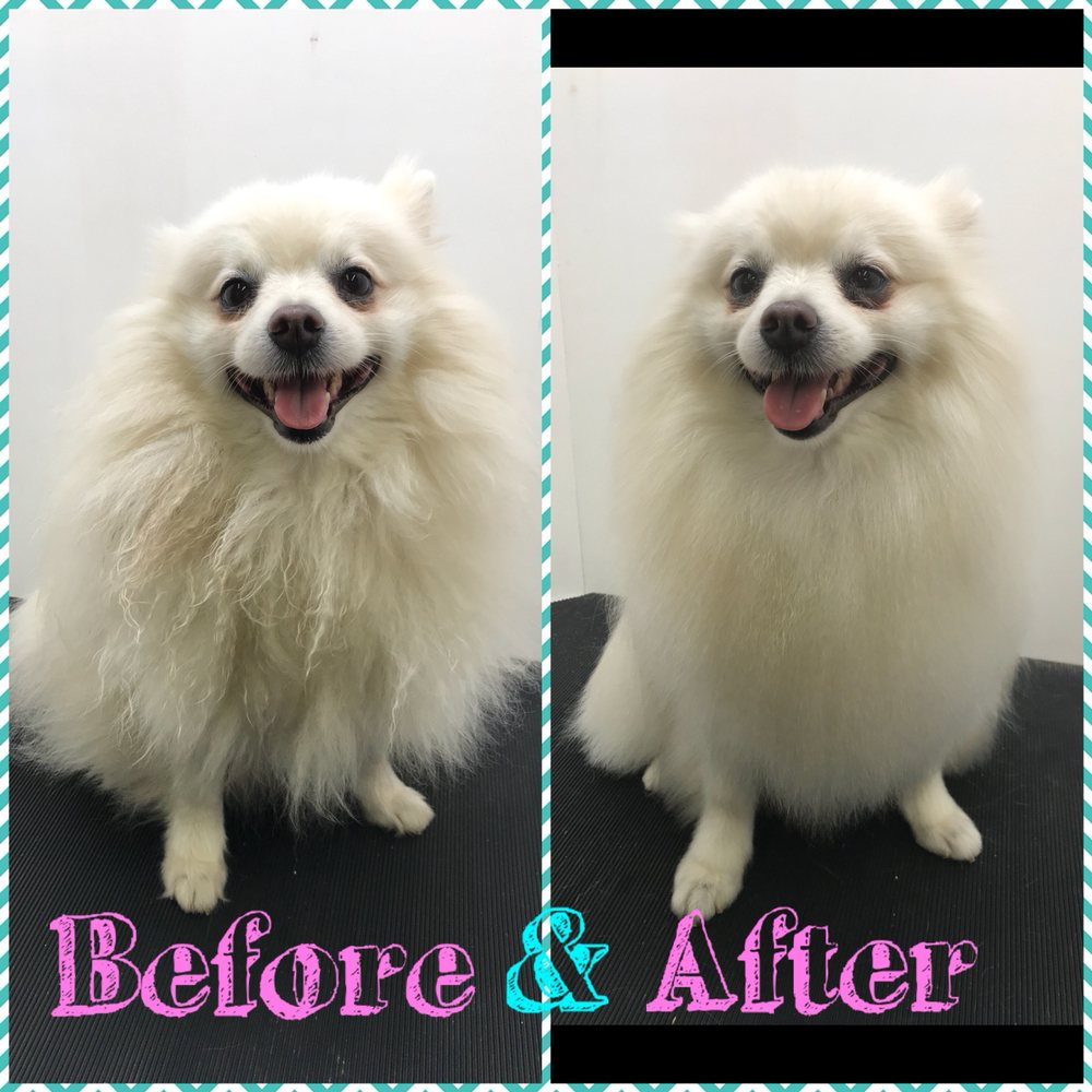 Clip and Dip All Dog Grooming